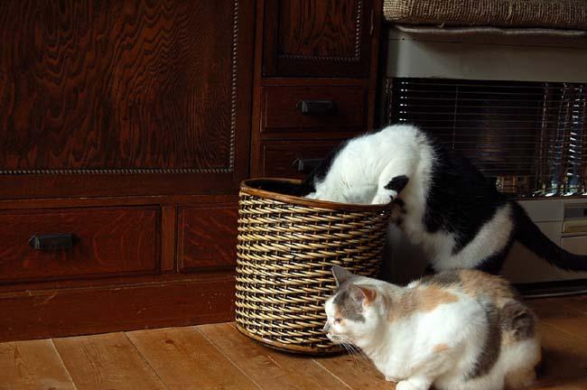 猫は好奇心旺盛 (16)