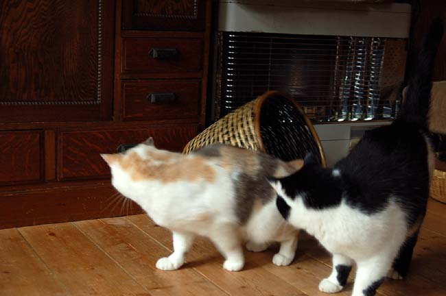 猫は好奇心旺盛 (17)