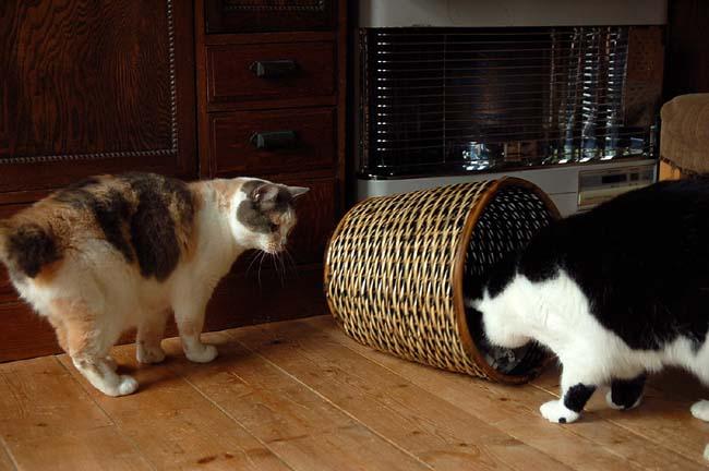 猫は好奇心旺盛 (18)