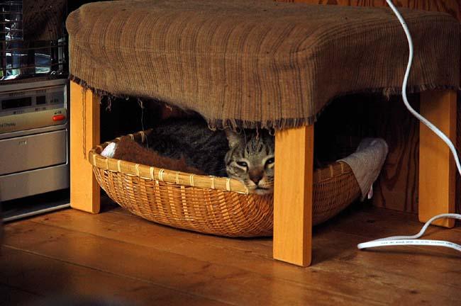 猫は好奇心旺盛 (23)