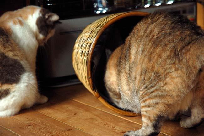 猫は好奇心旺盛 (24)