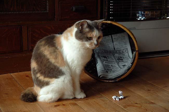 猫は好奇心旺盛 (27)