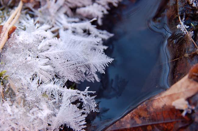 frost7.jpg