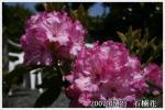 2007.05.21-1.jpg