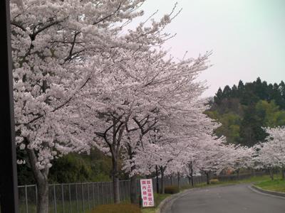 加瀬沼公園