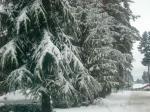 2008 snow 2