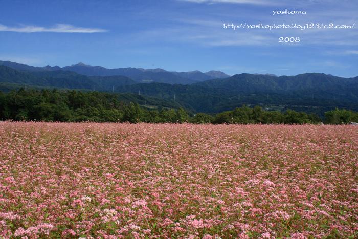 中川赤蕎麦2