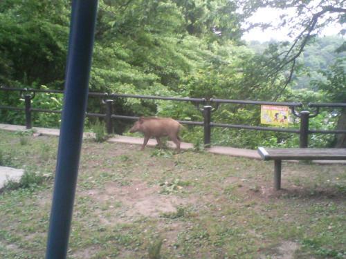 21.5.28猪2