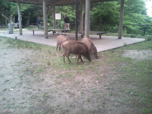21.5.28猪7