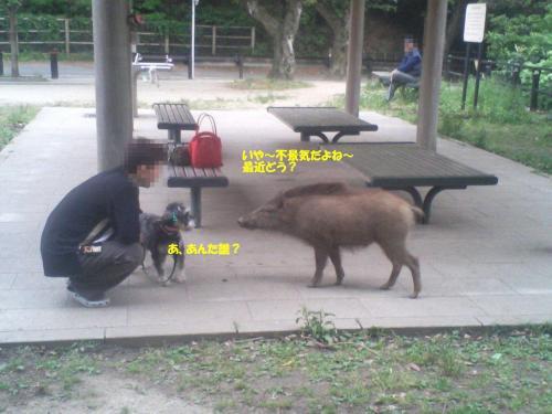 21.5.28猪8