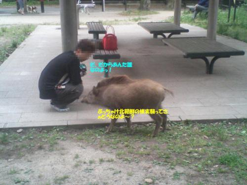 21.5.28猪9