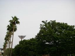 IMGP4401.jpg