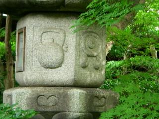 IMGP4637.jpg