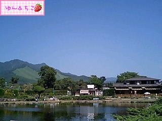 ちこちゃん日記59★綺麗な景色でしゅ★-4