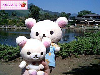 ちこちゃん日記59★綺麗な景色でしゅ★-5