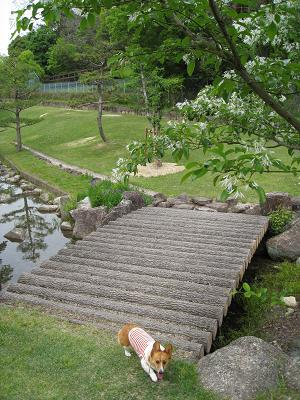 総合公園庭園5.8