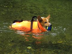泳ぐ8.3
