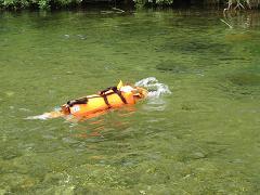 泳ぐ②8.3