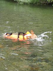 泳ぐ③8.3