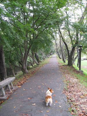 水源緑地の桜並木9.28