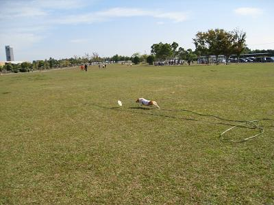 ガーデンパークの芝生②11.2
