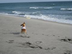 砂浜でフリ11.2