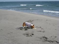 砂浜でフリ②11.2