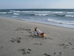砂浜でフリ③11.2