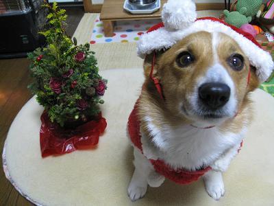 2008年メリークリスマス12.25