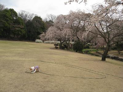 桜の下で遊ぶ3.31