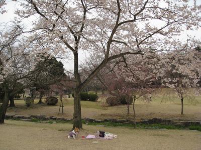 桜独占3.31