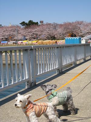 乙川沿い4.2