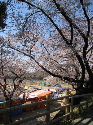 屋台と桜4.2