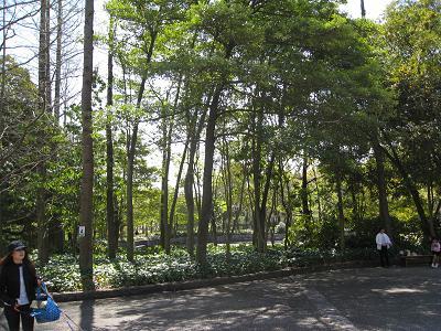 木も多い4.11