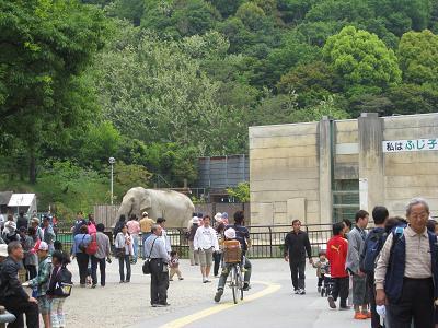 東公園の象5.4