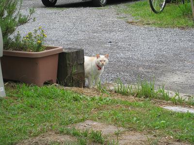 のぞく猫6.28