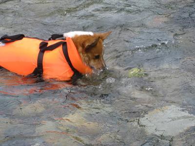 馬瀬川で泳ぐ8.9