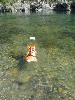 泳ぐシリ9.6