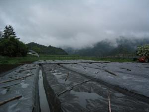 水がたまる畑