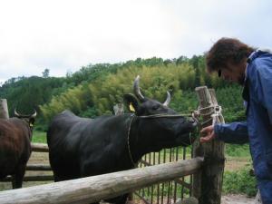 Nんばさんとこの牛