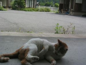 近所の猫 1
