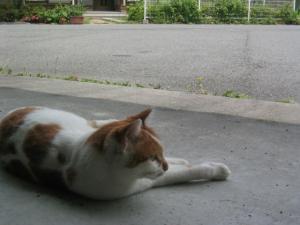 近所の猫 2