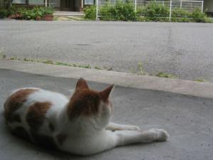近所の猫 3
