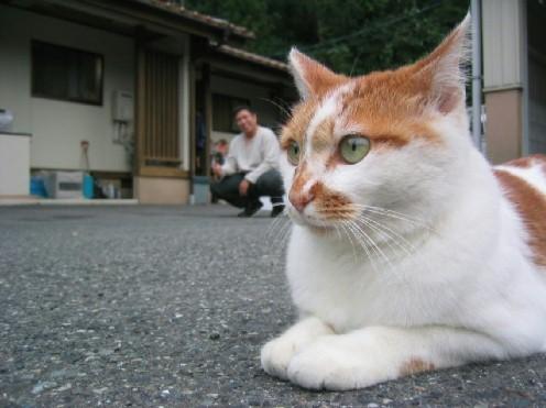 ゆうだけ番長と近所のネコ
