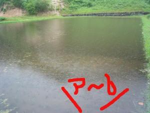 田んぼの水 溢れさす