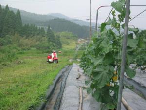 きゅうり畑