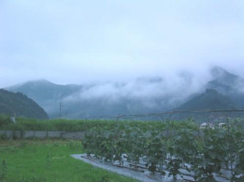 雨降りの7月1日