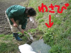 涌き水を利用する 4