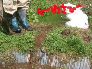 涌き水を利用する 5