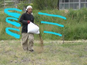 肥料まき 4